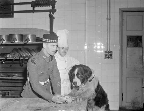 Wallace, the mascot of the 1st Battalion, The Canadian Scottish Regiment, being fed at a ceremonial dinner at the Mansion House attended by H.R.H. the Princess Royal, London, England, 6 December 1945.