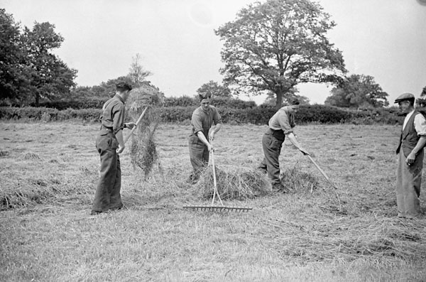 Soldiers of the 1st Canadian Corps assisting a farmer during the haying season, England, 16 June 1942.