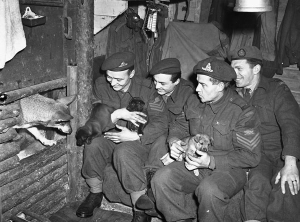 Gunners of the 5th Field Regiment, Royal Canadian Artillery (R.C.A.), in their dugout with Judy (left), an Alsatian dog adopted by the regiment in France and now the mother of six pups, Malden, Netherlands, 1 February 1945.