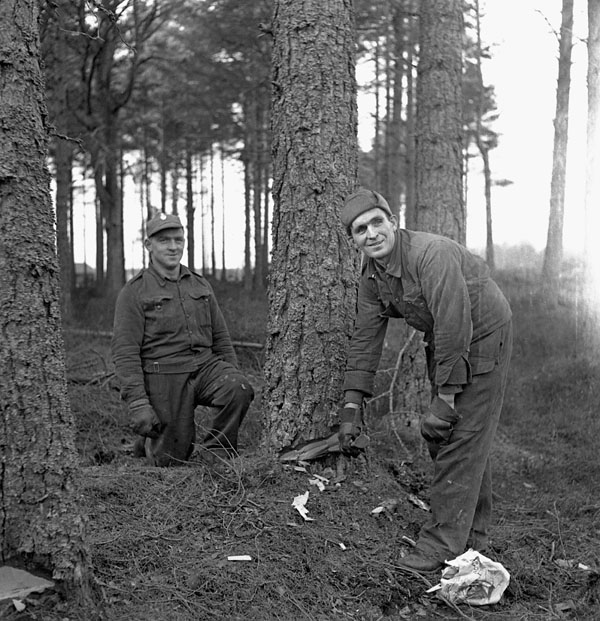 Personnel of No.27 Company, Canadian Forestry Corps, directing the fall of a tree, Forres, Scotland, 19 February 1944.