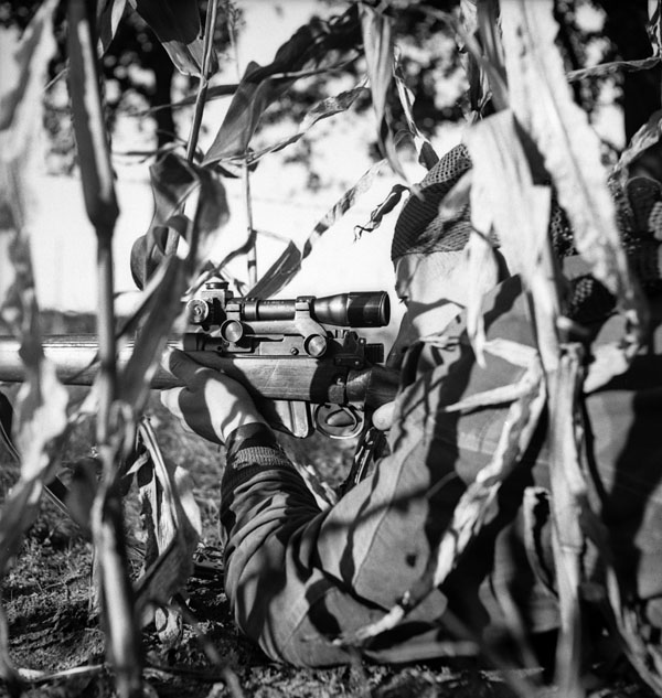 Corporal S. Kormendy of The Calgary Highlanders, who is wearing a Dennison smock and a camouflaged head scarf, takes a concelead firing position in a cornfield during a scouting, stalking and sniping course, Kapellen, Belgium, 6 October 1944.