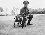 MIKAN 4442681 La mascotte (3e Bataillon d'infanterie canadienne) août 1916. [La mascotte (3e Bataillon d'infanterie canadienne), août 1916.]