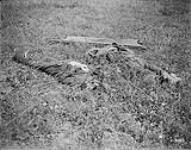 MIKAN 3397056 German dead killed during the Canadian advance. Battle of Amiens. August, 1918. Aug., 1918. [German dead killed during the Canadian advance. Battle of Amiens. August, 1918., Aug., 1918.]