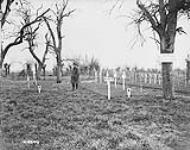 MIKAN 3403400 Cemetery of the 16th Canadian Infantry Battalion. April-May 1919 [Cemetery of the 16th Canadian Infantry Battalion., April-May 1919]