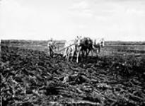 MIKAN 3335020 Breaking the Prairie. ca. 1900-1925 [97 KB, 760 X 556]