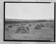 MIKAN 3643507 Stooking hay, Nova Scotia. [141 KB, 1000 X 790]