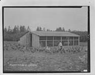 MIKAN 3643516 Poultry raising at Oromocto, N.B. [100 KB, 1000 X 796]