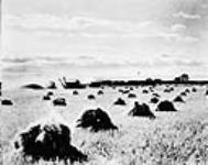 MIKAN 3256135 A threshing crew in operation. ca. 1930 [93 KB, 760 X 603]