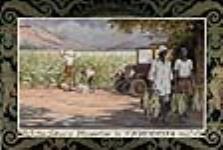 MIKAN 2897683 Plantation de tabac en Rhodésie du Sud. 1926-1934. [Plantation de tabac en Rhodésie du Sud., 1926-1934.]