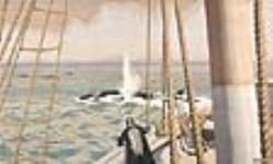 MIKAN 2897687 Les Falklands. 1926-1934. [Les Falklands., 1926-1934.]