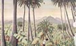 MIKAN 2897685 Fidji. 1926-1934. [Fidji., 1926-1934.]