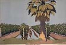 MIKAN 2898044 Irrigation des vignes, Australie. 1926-1934. [Irrigation des vignes, Australie., 1926-1934.]