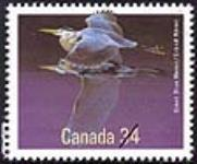 MIKAN 2266021 Great Blue Heron = Grand Héron [philatelic record]. [108 KB, 640 X 530]