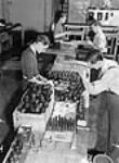 MIKAN 3195795 Workmen assembling hand grenades at the Frost and Wood plant. Apr. 1941 [44 KB, 354 X 480]
