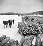 "MIKAN 3197697 Horses and men unloading logs onto a log ""dump"" on a frozen Sloe Lake. Mar. 1943 [50 KB, 458 X 480]"