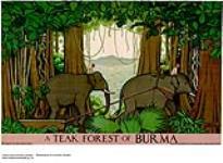 MIKAN 2845099 A Teak Forest of Burma. 1926-1934 [A Teak Forest of Burma., 1926-1934]