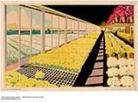 MIKAN 2845076 [untitled] :  greenhouse. 1926-1934 [[untitled] :, 1926-1934]