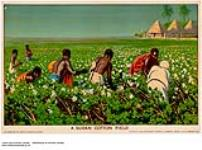 MIKAN 2845356 A Sudan Cotton Field. 1926-1934. [265 KB, 1000 X 739]