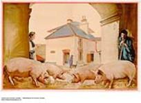 MIKAN 2845227 [untitled] :  pig farming in the Empire. 1926-1934 [[untitled] :, 1926-1934]