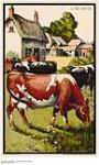 MIKAN 2844861 [untitled] :  view of bovines. 1926-1934 [[untitled] :, 1926-1934]