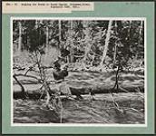 MIKAN 4304152 La pêche à la truite dans la rivière Petawawa, ParcAlgonquin  [Entre 1930 et 1960]. [230 KB, 1000 X 872]