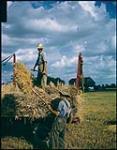 MIKAN 4312282 Harvesting oats on the Ed. Euie farm near Collingwood. On racks is Ed Euie, pitching sheaves is Jack Bell.  [Récoltant de l'avoine sur la ferme Ed. Euie près de Collingwood, Ontario.] 1949. [320 KB, 1000 X 1275]