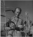 MIKAN 4324835 Farming Ontario, Mrs. Moran in the corn field . 1942 [158 KB, 1000 X 1106]