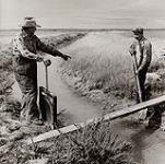 MIKAN 5196198 [Father and son working on a drainage ditch]. [ca. 1955] [[Father and son working on a drainage ditch]., [ca. 1955]]