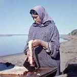 MIKAN 4324260 Woman cutting whale meat, near Tuktoyaktuk, N.W.T.  July 23, 1956. [171 KB, 1000 X 990]