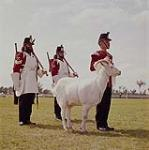 MIKAN 4301911 The Fort Henry Guard mascot taken during the opening ceremonies of Upper Canada Village on June 24th. 1961.   June 24 1961. [171 KB, 1000 X 1004]