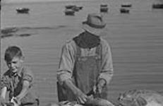 MIKAN 4325752 Gaspé 1951, (B) un homme et un garçon qui nettoient le poisson. 1951 [78 KB, 1000 X 649]