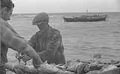 MIKAN 4325783 Gaspé 1951, (D) homme qui nettoie le poisson. 1951 [69 KB, 1000 X 618]