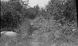 MIKAN 4542786 The Old Portage trail past the Little Chaudiere, Val-Tétreau, Hull, looking west  1924. [183 KB, 1000 X 594]