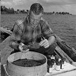 MIKAN 3526789 Roy Cockburn, of Sturgeon Falls, Ont., packs four-ounce jars with Lake Nipissing Caviar. 1951. [190 KB, 1000 X 1003]